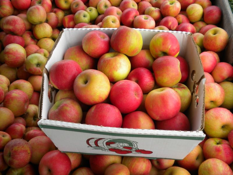 Tasty Hafs Road Orchard Honeycrisp Super Box Special!